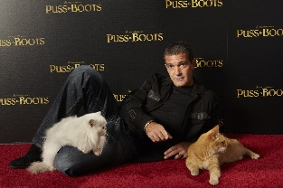 puss_in_boots_cat_2